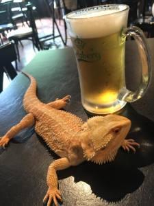 AmandaSung_beer-lizard
